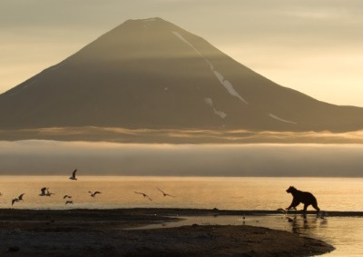 Kamchatka. Bears and volcanoes